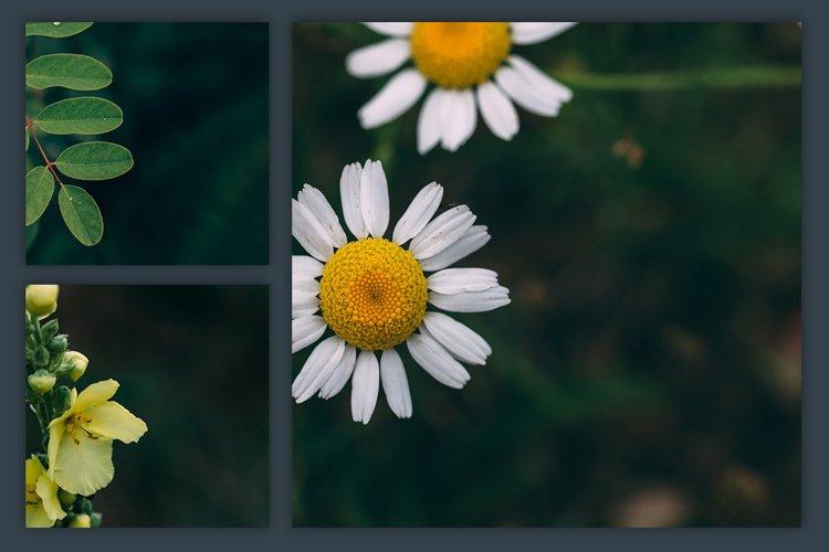 Instagram Photo Pack - Flora Vol. 1 example 4