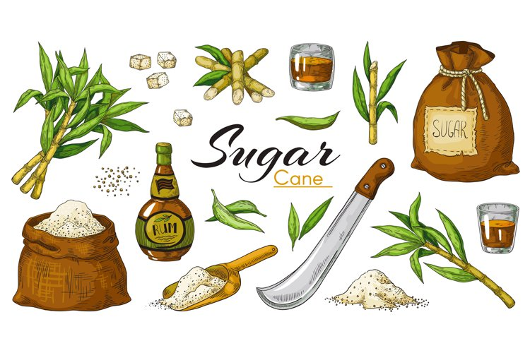 Hand drawn sugarcane and rum. Colored vintage alcoholic beve example image 1