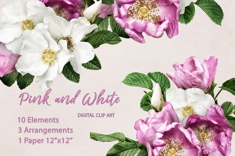 Wild roses clipart. Pink and white roses bouquets. example image 1