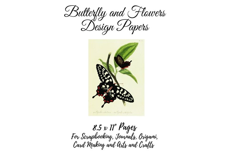 Vintage Botanical Full Page Butterfly Sheets 8.5 x 11, PDF