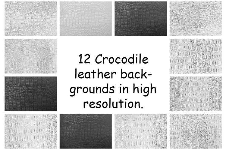 A collection of a crocodile leather backgrounds.