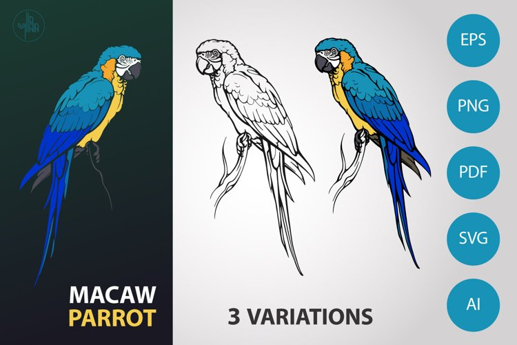 Macaw parrot illustration, realistic bird, vector and PNG