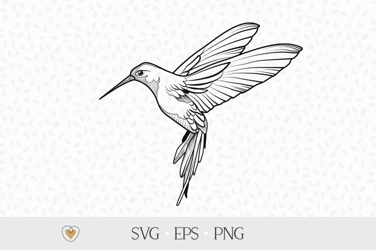 Hummingbird svg, Bird flying png