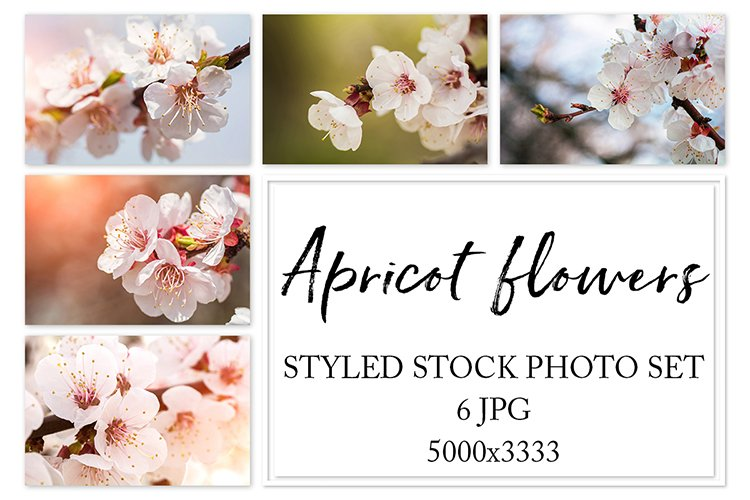 Apricot flowers. Styled stock photo set