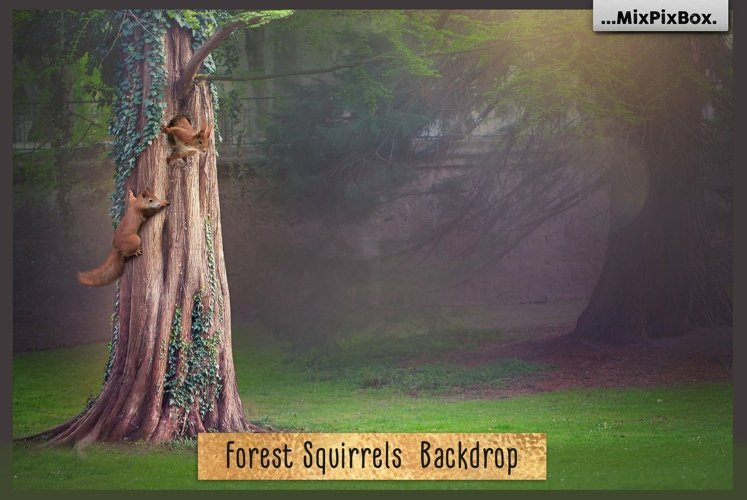 Forest Squirrels Backdrop