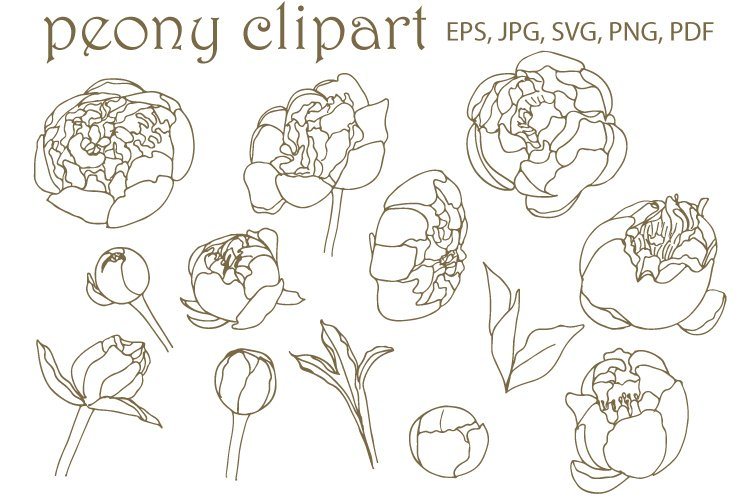 Peony and leaves SVG. Hand drawn doodle flowers.Vect
