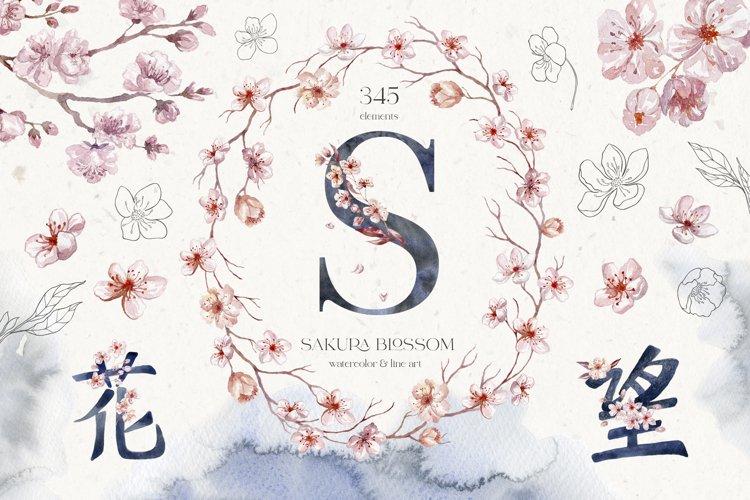 Sakura Blossom. Watercolor & Line Art.