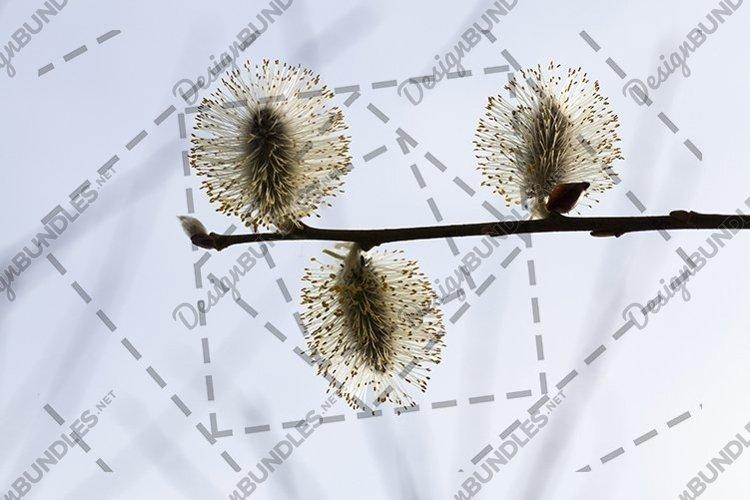 three flowers example image 1