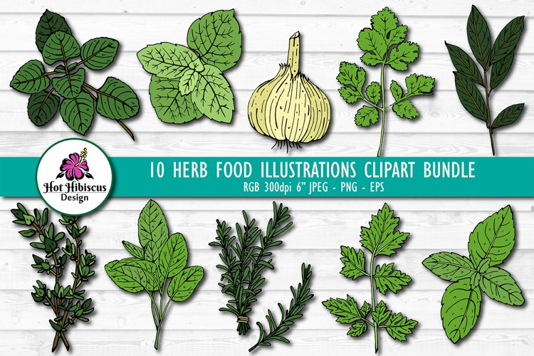 Hand Drawn Herb Illustrations Clipart Bundle