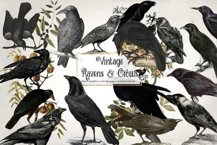 Vintage Ravens and Crows Clipart