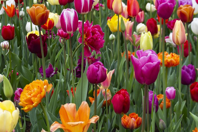 Powerful multicolor flowers outdoor shot example image 1