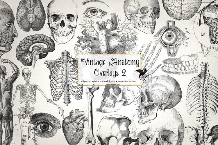 Antique Anatomy Overlays Set 2