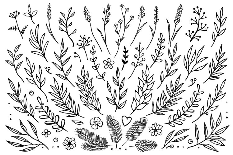 Branches svg. Wild herbs and flowers, Vector design elements