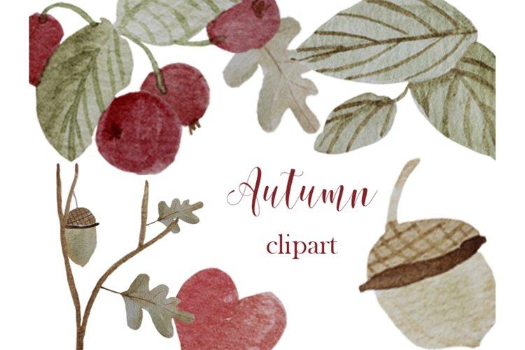 Autumn clipart Watercolor oak leaf, red berries, acorn, twig example image 1