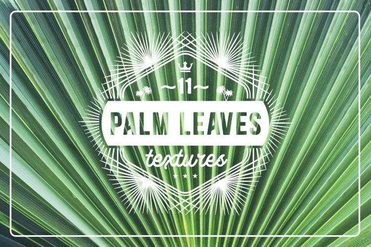 11 Palm Leaves Textures example image 1