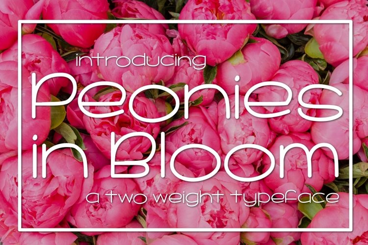Web Font Peonies in Bloom example image 1