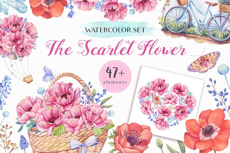 The Scarlet Flower - Watercolor Collection