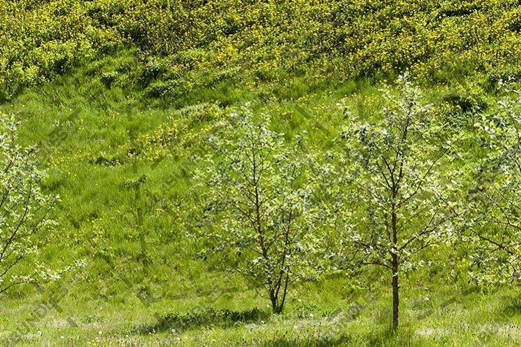 Trees in the park in spring. example image 1