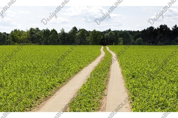a road paved on the sand example image 1