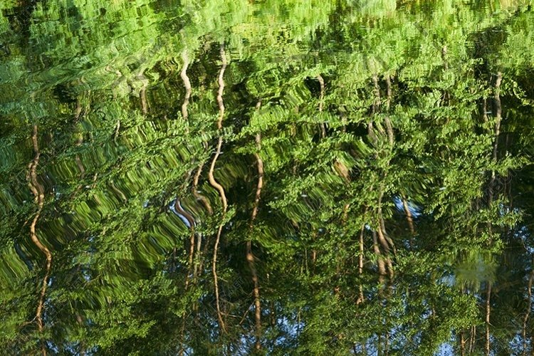 Reflection of pines example image 1