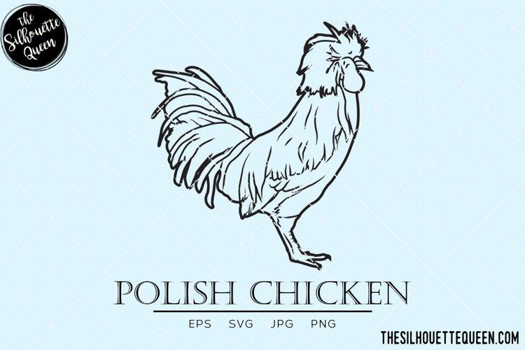 Polish Chicken Vector