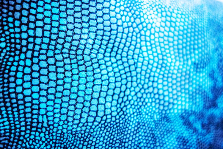 Close Up of Abstract Blue Real Snake Skin Snake Print example image 1