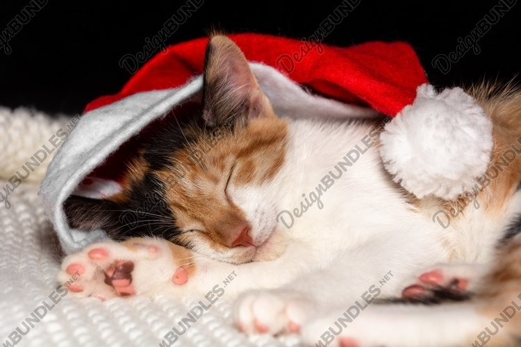 Sweetly sleeping kitten in santa claus hat example image 1