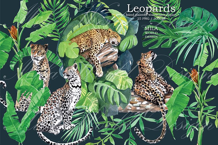 Leopards Watercolor Clip Art, Hand painted Jungle clipart example image 1
