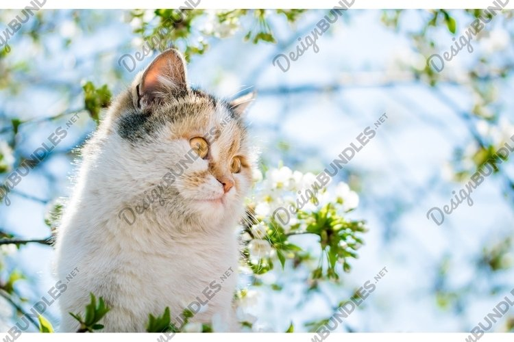 Funny red cat on the background of a blooming spring garden example image 1