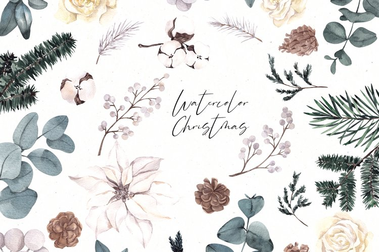 White Christmas Flower. Watercolor clipart