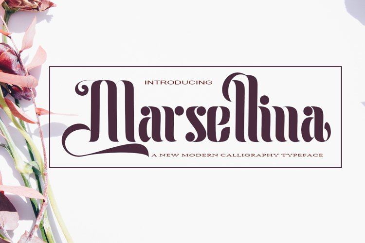 Marsellina example image 1