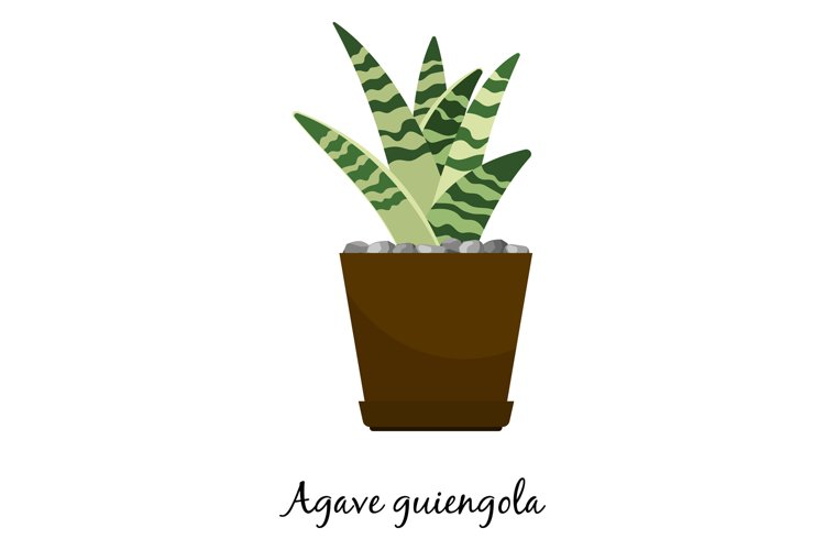 Agave guiengola cactus in pot example image 1