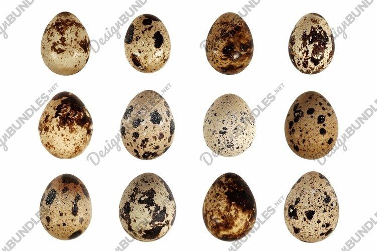 Quail eggs bird animal food isolated set on white background