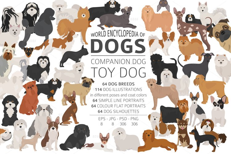 Dog encyclopedia Companion and toy dogs example image 1