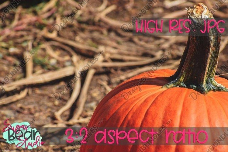 Pumpkin - Stock Photo example image 1
