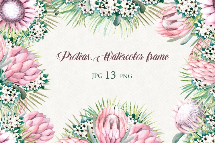 Protea flowers. Watercolor frames.
