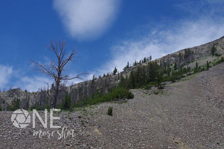 Yellowstone National Park Hillside Burned Trees Flowers
