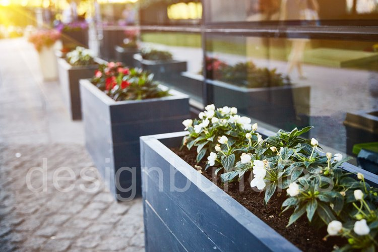 Blooming outdoor potted flowers at sunset example image 1