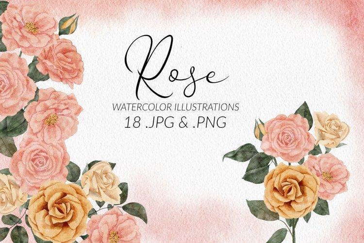 18 Watercolor Rose Flower Illustration Set