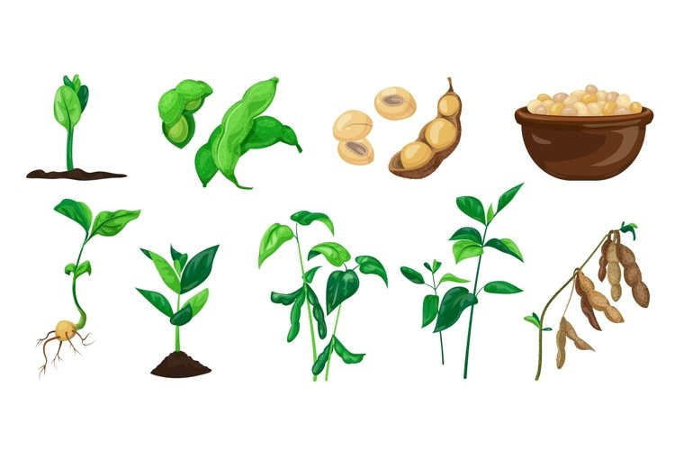 Soybean icons set, cartoon style example image 1