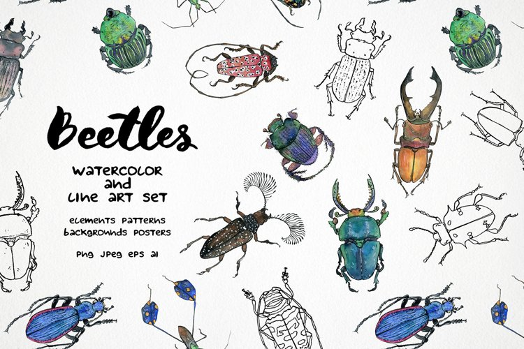 Beetles clipart - watercolor & vector line art insects example image 1