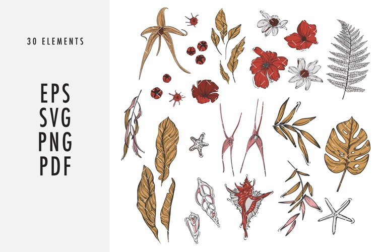 Flowers and shells SVG clipart set line art example image 1