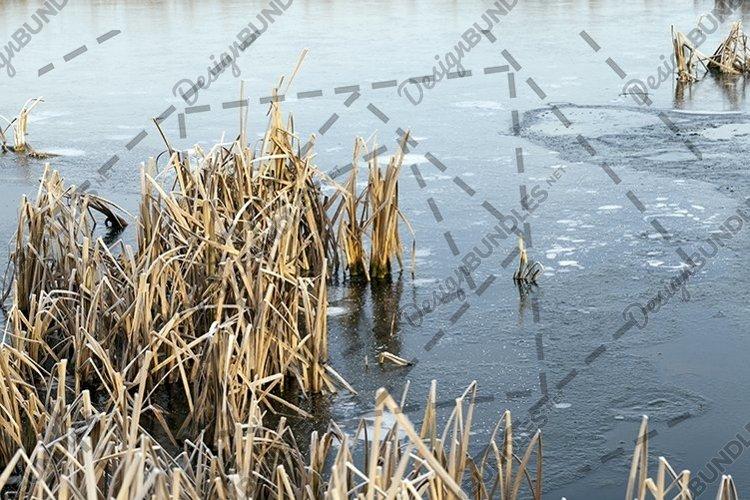 frozen swamp example image 1