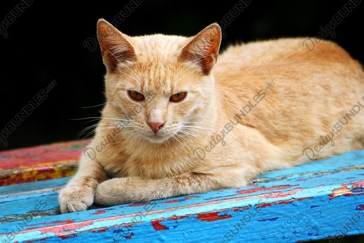 Red cat example image 1