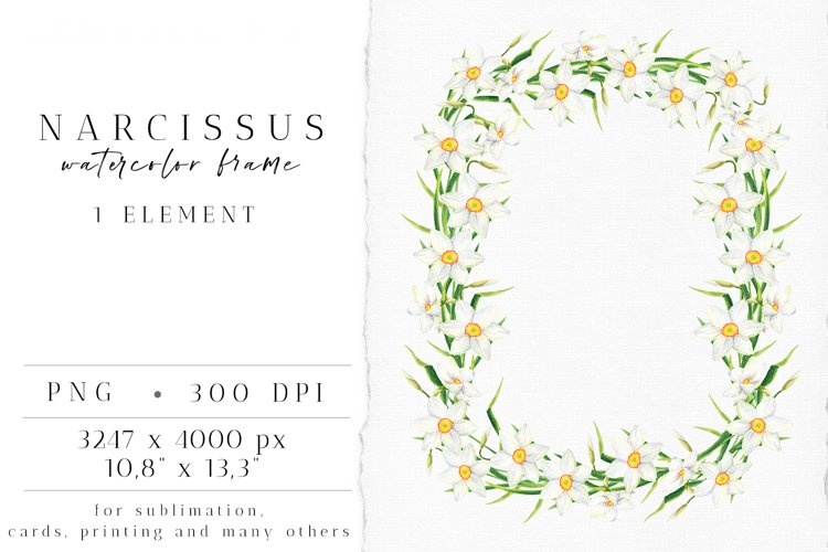 White Narcissus Frame. Spring Daffodil Flowers PNG Clipart