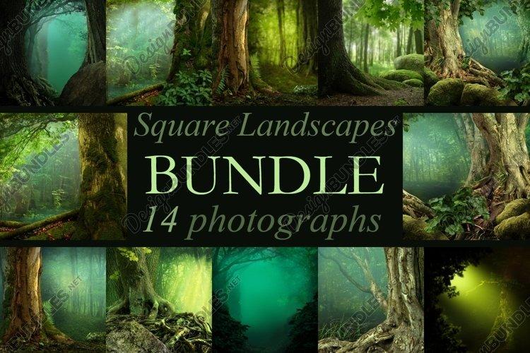 Forest landscapes Bundle 14 square JPG photos / Only square
