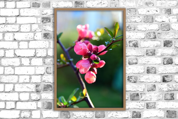 Nature photo, flower print, spring flowers, floral