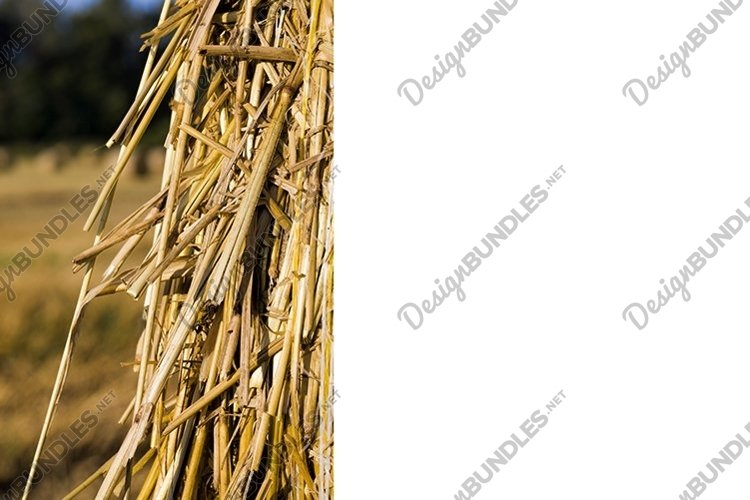 large cylindrical stacks of wheat straw example image 1