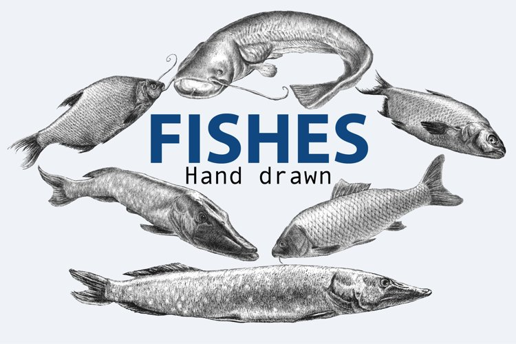 Fishes. Hand drawn. example image 1