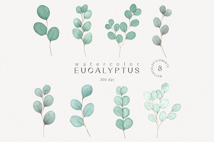 Watercolor eucalyptus leaves botanical clipart